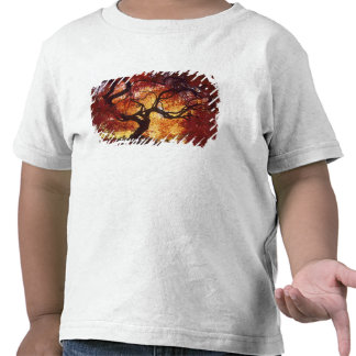 Connecticut: Darien, Japanese maple 'Acer T-shirt