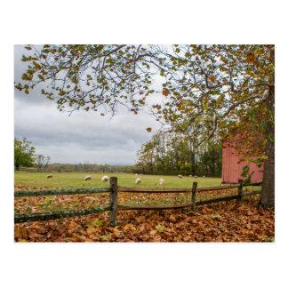 Connecticut Fall Farm Postcard