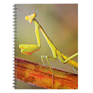 Connecticut Praying Mantis Notebook