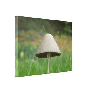 Conocybe rickenii Mushroom Canvas Print