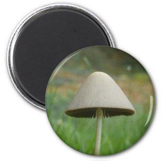 Conocybe rickenii Mushroom Magnet