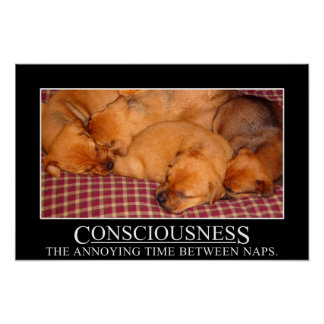 Consciousness: the annoying time between naps (L) Poster