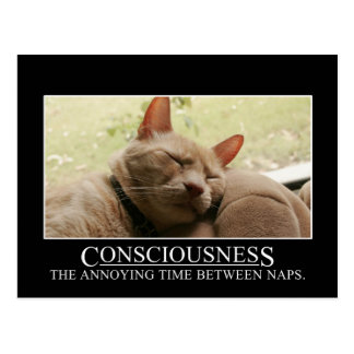 Consciousness: the annoying time between naps postcard