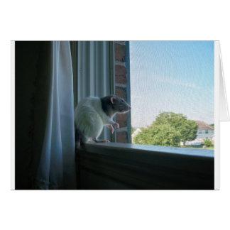 Contemplative Rat Card
