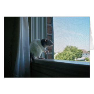 "Contemplative Rat ""Wish You Were Here"" Note Card"