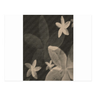 Contemporary Black & White Floral Postcards