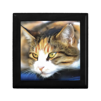 Contented Cat Gift Box