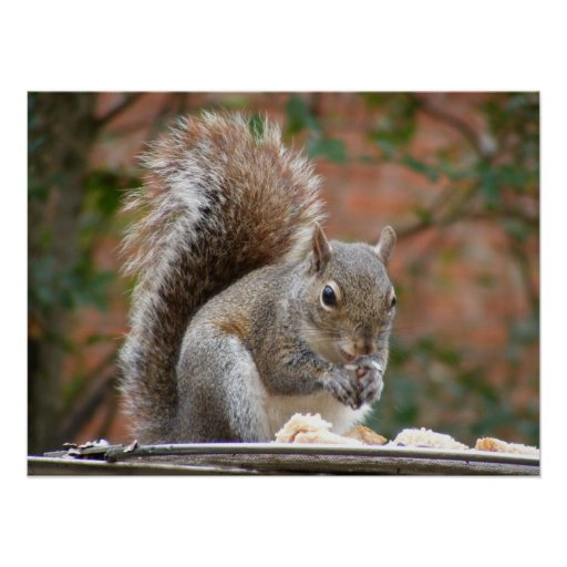 Contented Squirrel Poster