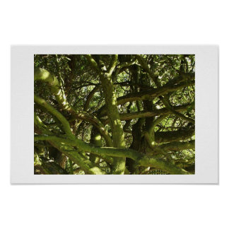 Contorted Branches Poster