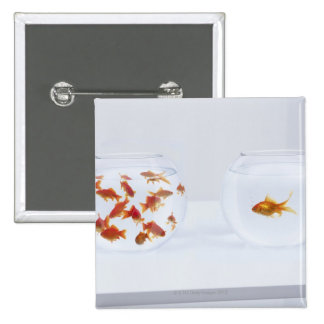 Contrast of  many goldfish in fishbowl and 15 cm square badge