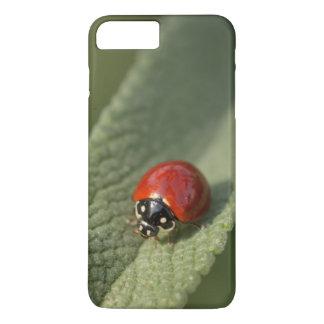 Convergent ladybird beetle on Cleveland sage iPhone 7 Plus Case