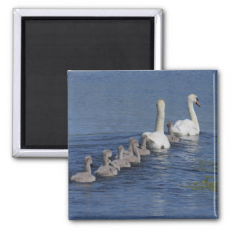 Convoy of Swans Square Magnet