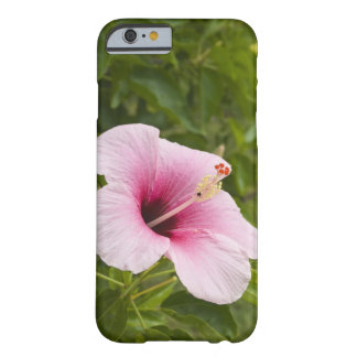 Cook Islands, Atiu. Hibiscus flower. Barely There iPhone 6 Case