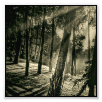 Cool Black and White Forest Sunshine Nature Photo Print
