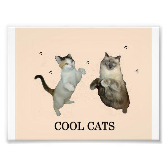 Cool Cats Photo Print