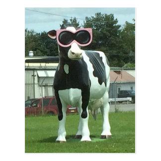 cool cow 1 postcard