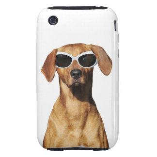 Cool dog, Rhodesian Ridgeback wearing sunglasses iPhone 3 Tough Cover