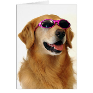 Cool Golden Retriever Card