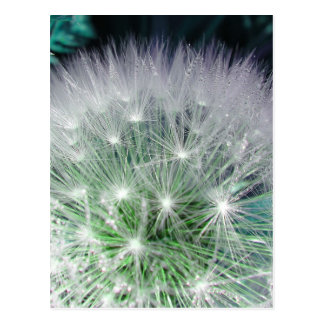 Cool green and white dandelion with waterdrops postcard
