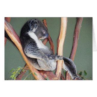 Cool Koala Greeting Card