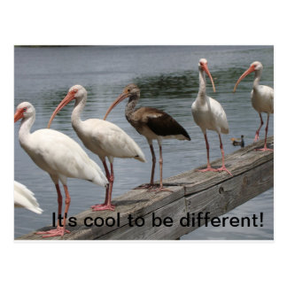 Cool to be different postcard