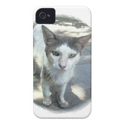 Cool Town Cat Green Eyes Blackberry Bold Case
