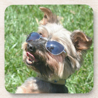 Cool Yorkshire Terrier Drink Coasters