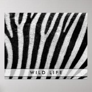Cool Zebra Pattern Texture Poster