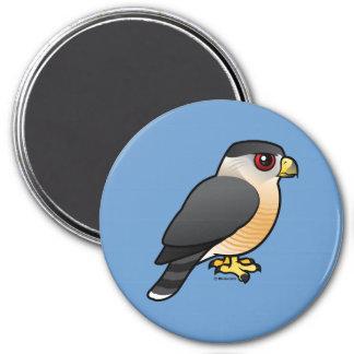 Cooper's Hawk Magnet