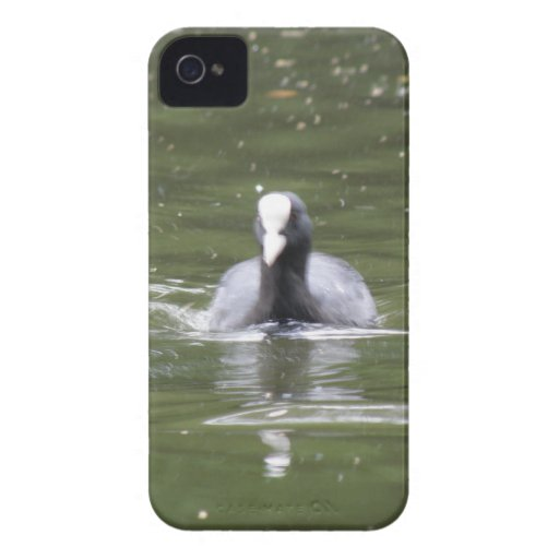 Coot Swimming Blackberry Bold Case