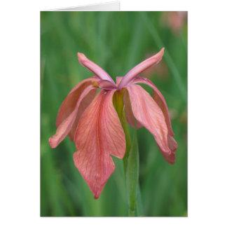 Copper Iris Card