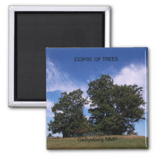 COPSE OF TREES SQUARE MAGNET