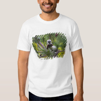Coquerel's Sifaka in the forest Shirts