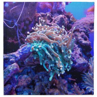 coral-1053837 napkin
