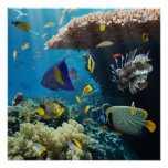 Coral and fish in the Red Sea, Egypt Poster