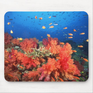 Coral and fish mouse pad