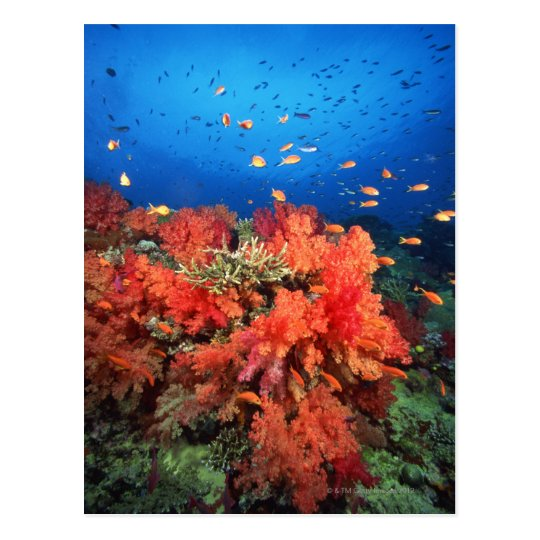 Coral and fish postcard