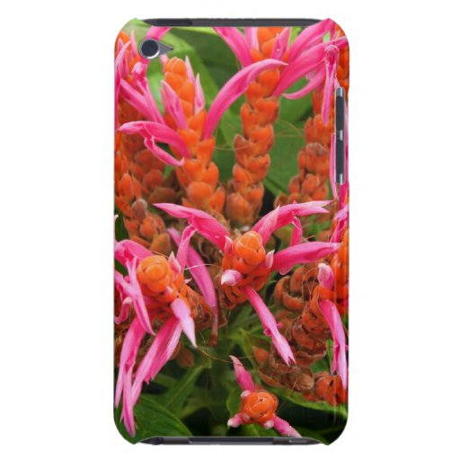 Coral Aphelandra Case-Mate iPod Touch Barely There Case-Mate iPod Touch Case