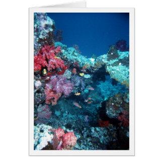 Coral Bridge, Rainbow Reef, Fiji Card