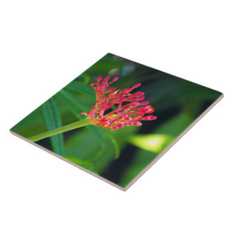 Coral Bush in bloom Tile