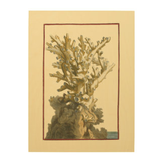 Coral by the Sea Wood Wall Decor