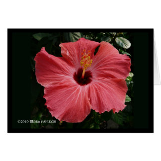 Coral Hibiscus Card