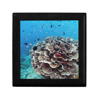 Coral Island Gift Box