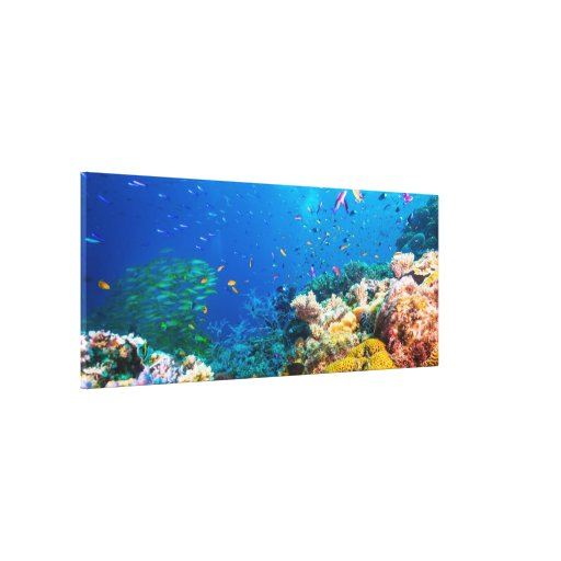 Coral Reef And Tropical Fish Stretched Canvas Print