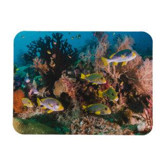 Coral Reef magnet