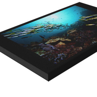 Coral Reef of Indonesia Canvas Print