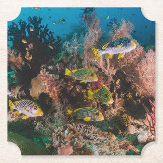 Coral Reef paper coasters