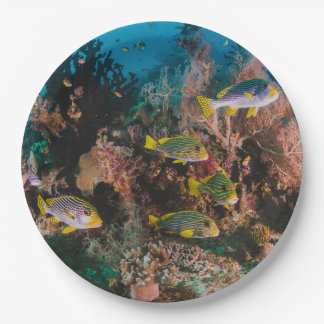Coral Reef paper plates