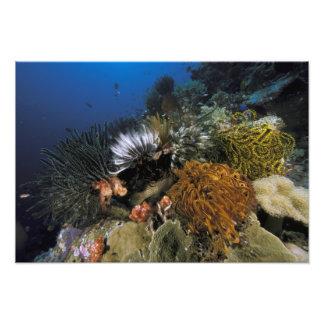 Coral reef. art photo
