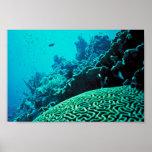 Coral Reef Print